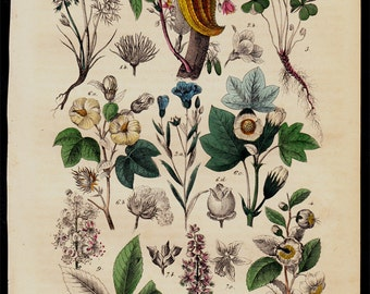 1850 Antique BOTANICAL print, green leaves, plants, flowers and wild, hand colored, original antique 166 years old.
