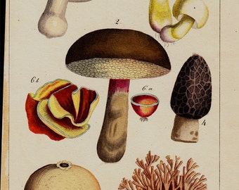 1833 Antique print of flowers, wild mushrooms, fungus, hand colored engraving