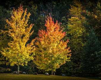 Two Colorful Autumn Trees by Wabasis Lake in Southwest Michigan No.6359 - A Fall Fine Art Landscape Photograph
