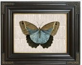 COUPON SALE Butterfly insect print on dictionary page Sky blue Brown Tan Dictionary art print Wall decor Digital art print Item No C51