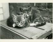 "Vintage Photo ""Kitten Friendship"" Baby Kitty Cat Snapshot Antique Photo Old Black & White Photograph Found Paper Ephemera Vernacular - 134"