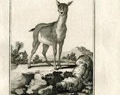 1811 Antique Print Female Antelope, Le Antelope Femelle, Buffon Natural History, Copper Engraving