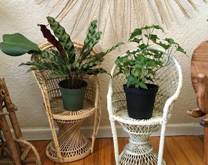 Vintage Mini Wicker Peacock Chairs / Planters / Decorative Displays