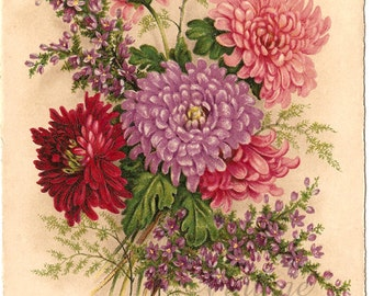 Antique French Postcard Chromolithograph Chrysanthemums Mums & Heather from Vintage Paper Attic
