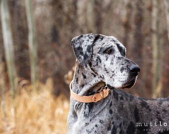 The Pelennor Collar: Natural Tan Leather Dog Collar
