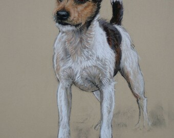 Jack Russell Terrier dog art LE fine art print 'Billy' from an original soft pastel and charcoal H Irvine