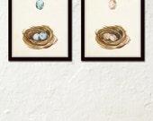 Watercolor Bird Nest Print Set No. 1 , Bird Eggs, Print Set, Wall Art, Giclee, Canvas Art, Watercolor Art, Gallery Wall, Poster, Print, Art
