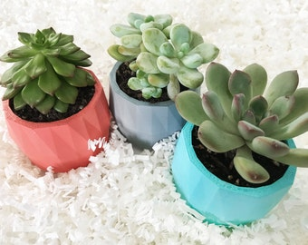 Gift Set of 3 Geometric Mini Succulent Planters with Succulents - Perfect for Home and Office Decor - Great Gift - Designer - Plant Lady