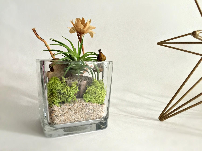Cube glass vase air plant terrarium living decor diy kit for Air vase