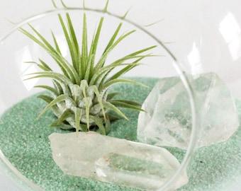 DIY Terrarium Kit || Air Plant, Clear Quartz Crystals, and Mint Sand ||