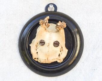 SALE! Vintage Roe deer wall plaque antlers decor taxidermy man cave trophy hunt southwestern
