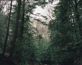 Forest Photography - Nature Landscape Photography River Woods Emerald Green Film Photography Fine Art Print Trees Woodland 16x20 Art Print