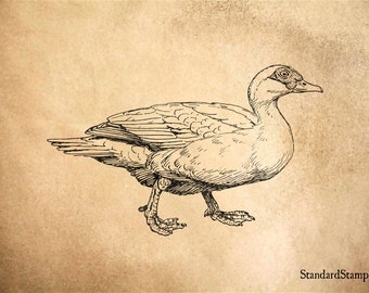 Muscovy Duck Rubber Stamp - 3 x 2 inches