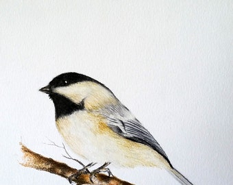Original Drawing, Colored Pencil Bird, Chickadee Illustration 5.5x8 inch