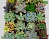 20 Beautiful and Unique Succulents