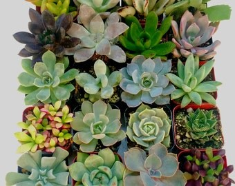 20 Beautiful and Unique Succulents