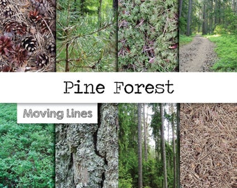 Pine Forest Digital Papers, Nature Photography Backdrops,  Woodland Wallpaper, Moss Spruce Fir Blueberries, Outdoors