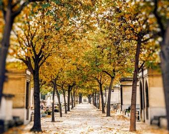 Paris in Fall Photography, Pere Lachaise, Fine Art Print, Paris France Modern Kitchen Chic Home Decor, Large Wall Art, Canvas,  16x20 20x24