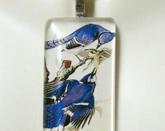 Blue Jay bird pendant and chain - BGP02-019
