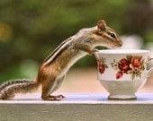 Tea Art, Tea Cup Print, Bone China Teacup, English Tea, Chipmunk Photograph, Cute Animals, Chipmunk Print, Wildlife Prints, Animal Photo