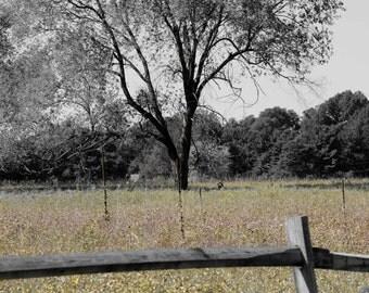 Single Tree in Fall digital Photography fine art print 5x7 or 8x10Home Decor