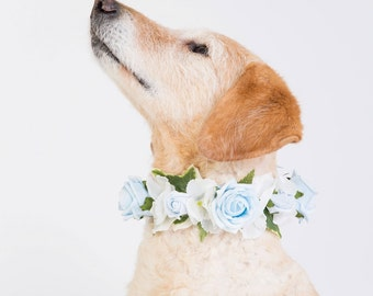 Blue Rose - Flower Dog Collar for Weddings – baby blue and white