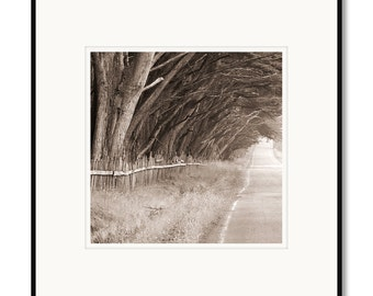 Black and white photography, sepia prints, cypress hedgerow, northern California, coastal trees, landscape photography, framed photography