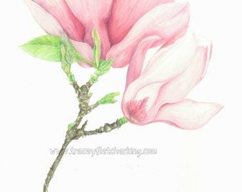 Botanical magnolias print