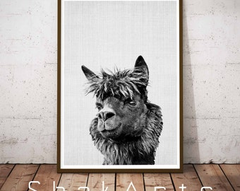Nursery Animal Decor Wall Art, Alpaca Print, Alpaca Photo, Printable Alpaca, Alpaca Decor, Farm Animals, Black and White, Alpaca Wall Art