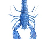 Blue Lobster Watercolor Painting 11x14 Print