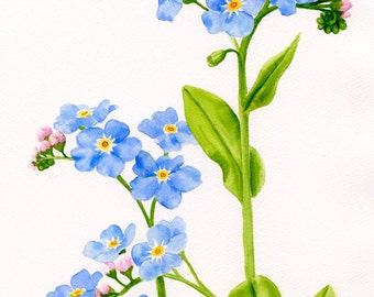 Forget me not flowers, watercolor painting, original watercolor, blue flowers, wild flowers, illustration, art, floral watercolor,painting