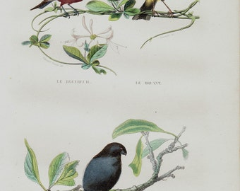 Antique print 1848 Lovely Antique BIRD print. bullfinch and bunting, Fine hand colored victorian engraving. Original antique