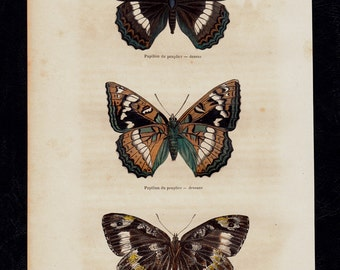 Antique print, 1850 BUTTERFLY print, hand colored, multicolored  Butterflies, Original antique