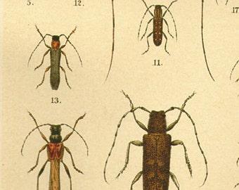 Vintage Beetle Print, 1890 Color Beetle Book Plate 7.5x5.25 oval red green blue bug 17
