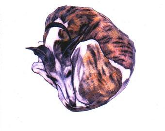 Whippet art print, whippet art images, signed giclée print, whippet wall art, whippet in art, whippet fine art print, brindle whippet
