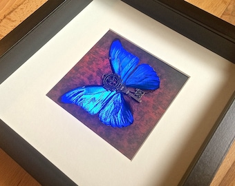 Real Butterfly Art, Pinned Butterfly, Real framed butterflies, butterfly shadowbox, mounted butterflies, Blue Morpho insect skeleton key art