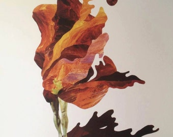 Fine Art Print - Shroud - 11x17