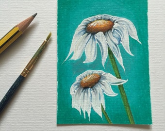 Two wild daisies ACEO/ Artists trading card. Coloured pencil. Free UK delivery.