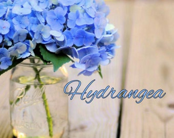 Hydrangea Candle/Bath/Body Fragrance Oil ~ 1oz Bottle