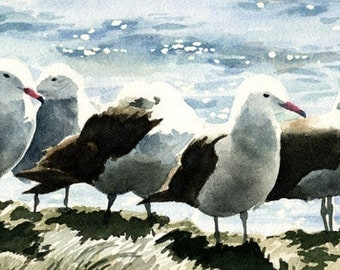 Seagulls Art Print - Watercolor Painting - Signed by Artist DJ Rogers - Wildlife - Wall Decor