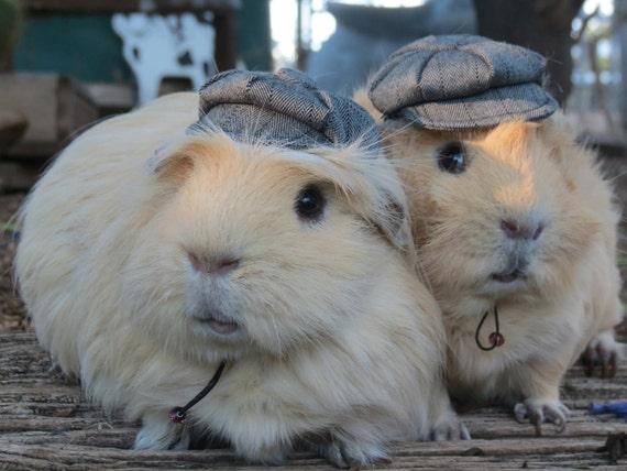 Newspaper Boy Hat  for small pet Hedgehog Vogue Guinea Pig Mini pig Ferret herringbone small animals Cat Dog Puppy Pinkismart