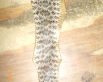 Baby rattle snake skin