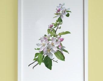Cherry blossoms A4 print, spring flower botanical print, minimalist photographic print, fine art photography print