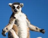 Lemur photography prints, animal print, print art, animal nursery decor, photography wall art, fine art photography, photo decor, lemur