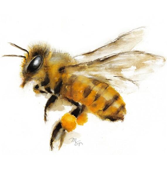 Honey Bee Watercolor Painting Art Print Nature