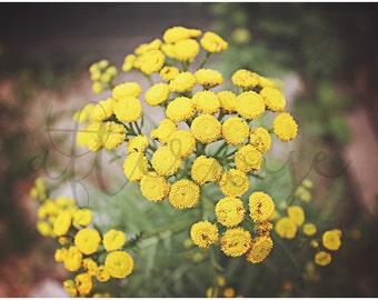 Flower Fine Art Photography Print. Flower Photography. Yellow Flower Photo. Flower Print. Botanical Print. Botanical Art. Nature Art.