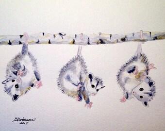 Three baby opossums, original 8x10 inches