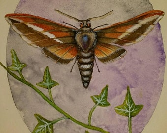 A4 waterolour print of moth and ivy on textured paper