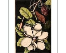 fabric panel - magnolia (3)