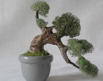 MB15 Miniature Bonsai tree in grey planter